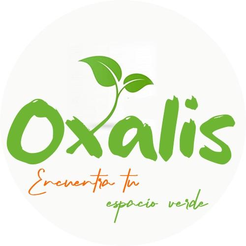 oxalis - Vivero Oxalis